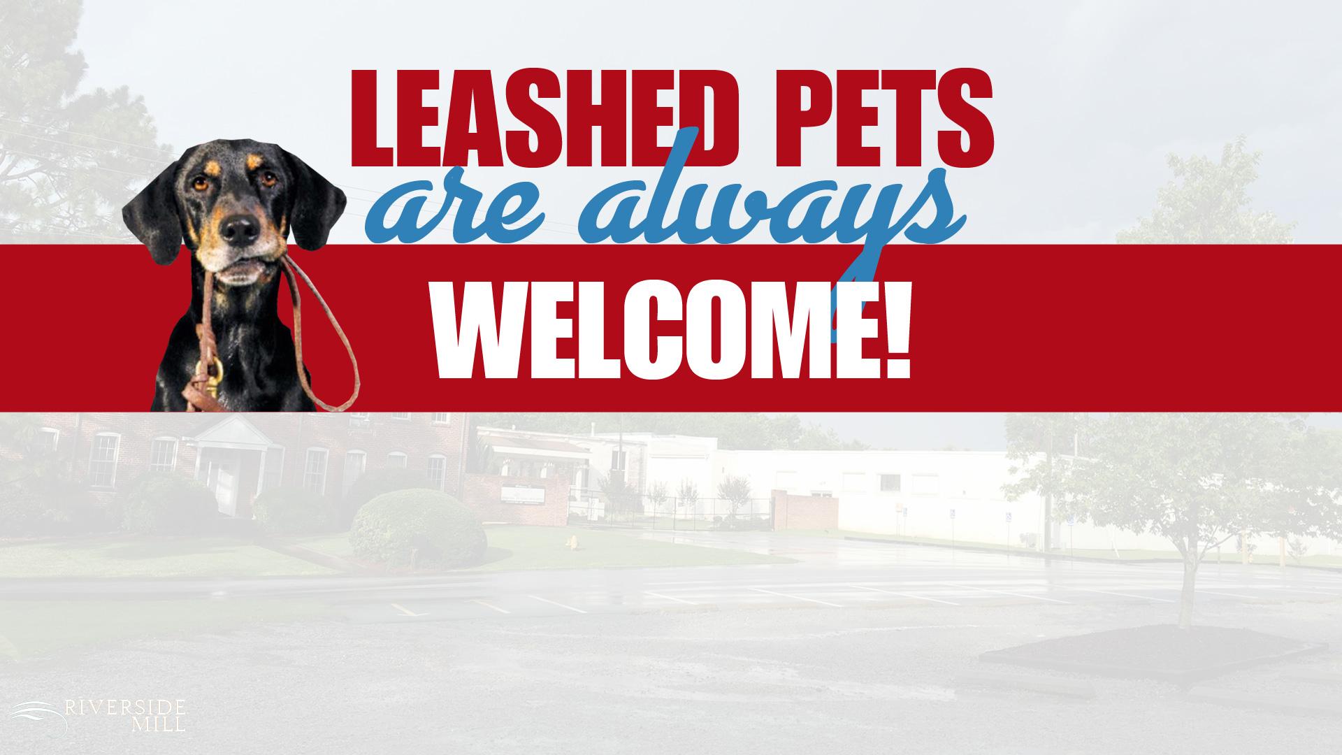 leashed-pets3